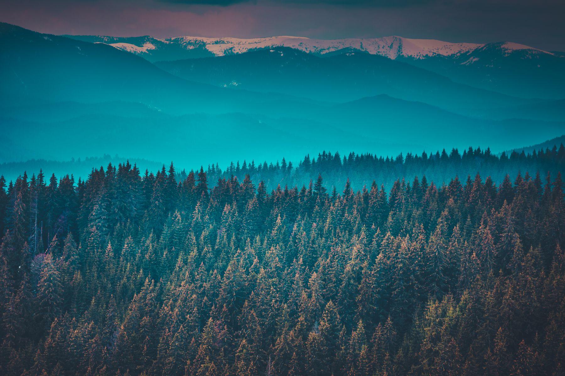 Ruita Legnami Foresta